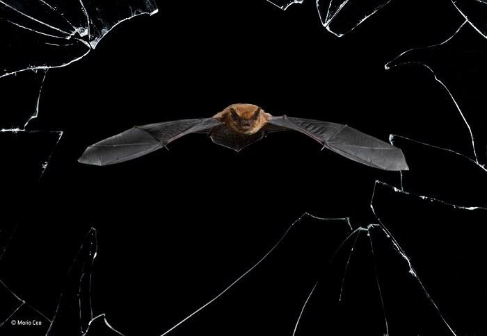 Chiêm ngưỡng tuyệt tác thiên nhiên từ cuộc thi Wildlife Photographer of the Year 2016